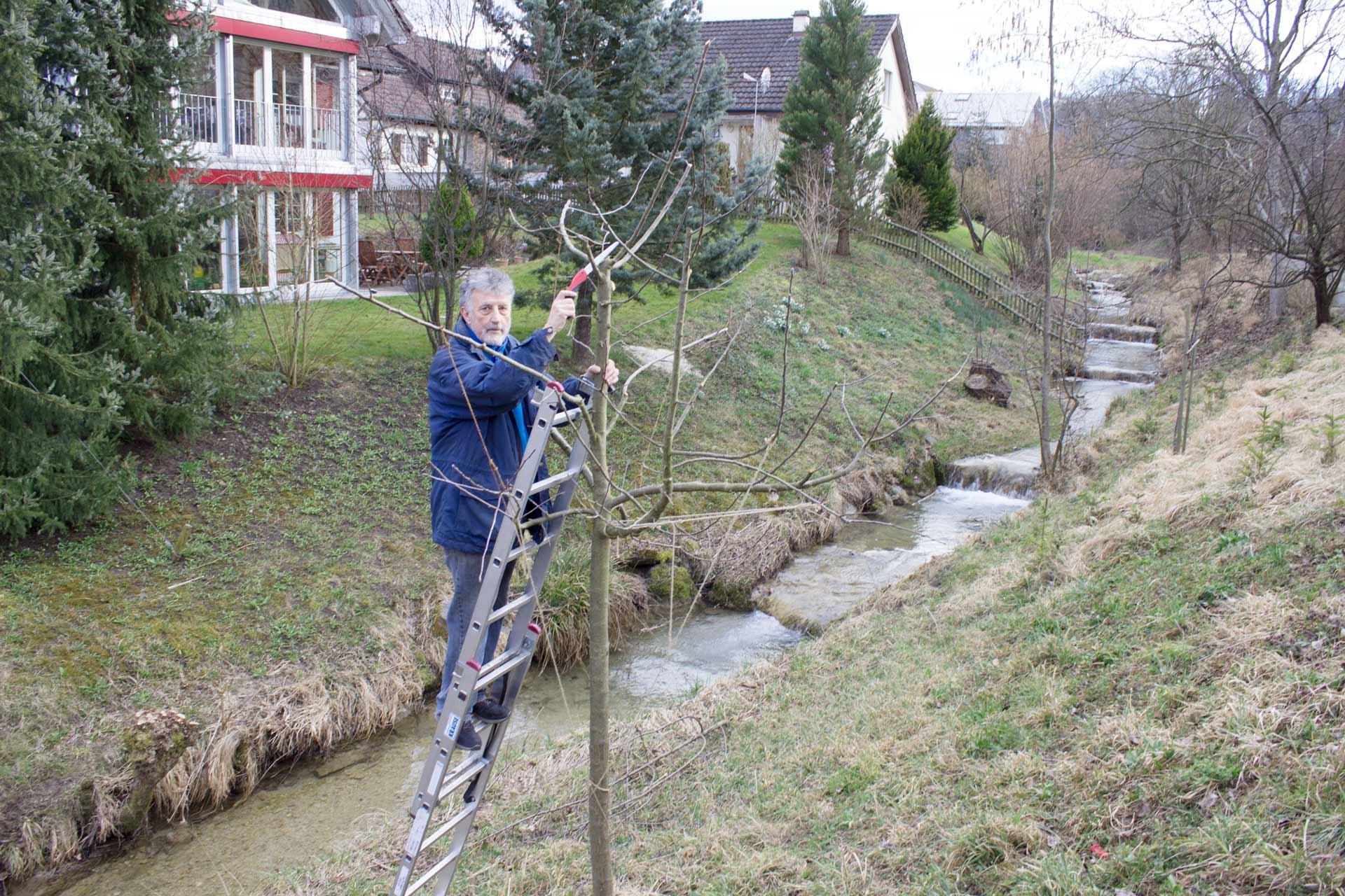 Baueme-schneiden-im-Bindersgarten-Tägerwilen-4