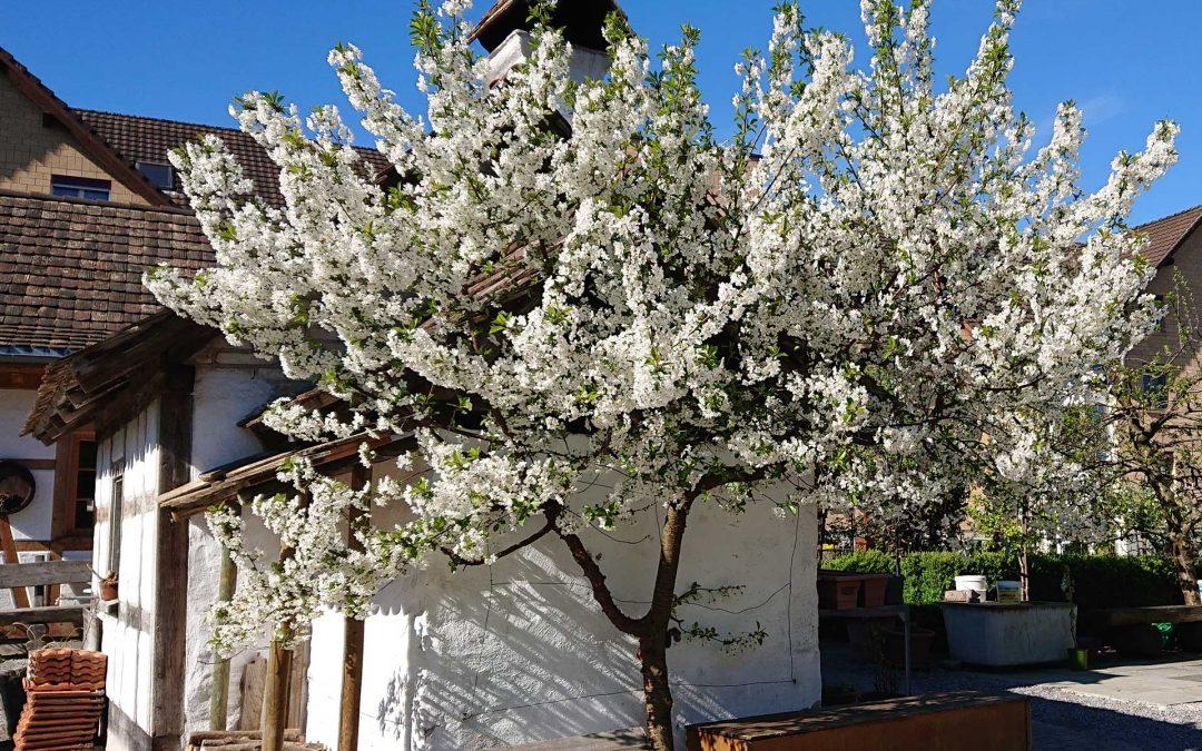 Frühling rund um den Bindersgarten