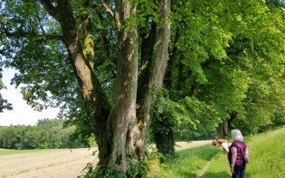 Impressionen Waldausflug mit Bewohnern vom Zentrum Bindersgarten