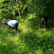 Waldmeister sammeln mit Bewohnern (5)