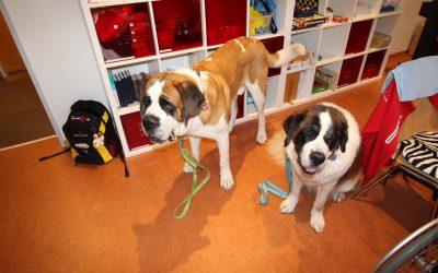 Therapiehunde zu Besuch um Bindersgarten